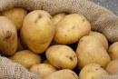 نابل: حجز 170 طنا من البطاطا قيمتها 160 ألف دينار