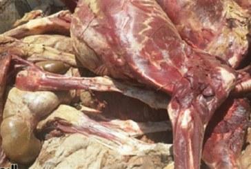كانت مُوجّهة للنزل والمصحات: حجز 35 طنّا من اللحوم الفاسدة بأريانة