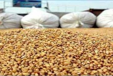 سيدي بوزيد: توزيع كمية من البذور الممتازة على صغار الفلاحين
