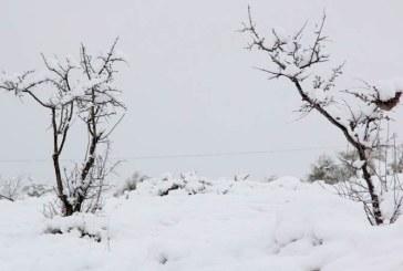40 سنتيمترا من الثلوج تعزل مدينة ساقية سيدي يوسف