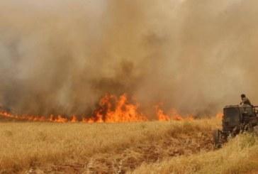 سليانة: حريق ياتي على 15 هكتارا من صابة الحبوب