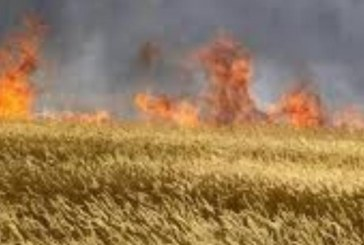 الكاف-معتمدية السرس: النيران تلتهم 200 هكتارا من حقول الحبوب