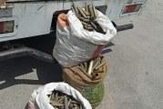 فرقة الحرس الديواني بصفاقس تحجز 2250 ظرف لذخيرة مختلفة الأعيرة