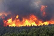الكاف: اندلاع حريق هائل بجبل 'الطوال' بساقية سيدي يوسف