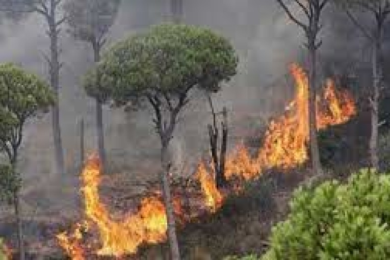 وزارة الفلاحة:عقوبات حرق الغابات والمزارع تصل حدّ إعدام