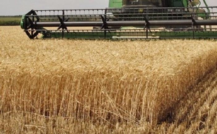 عبد المجيد الزار: صابة الحبوب ضعيفة رغم الزيادة ب40 بالمائة مقارنة بالموسم الفارط